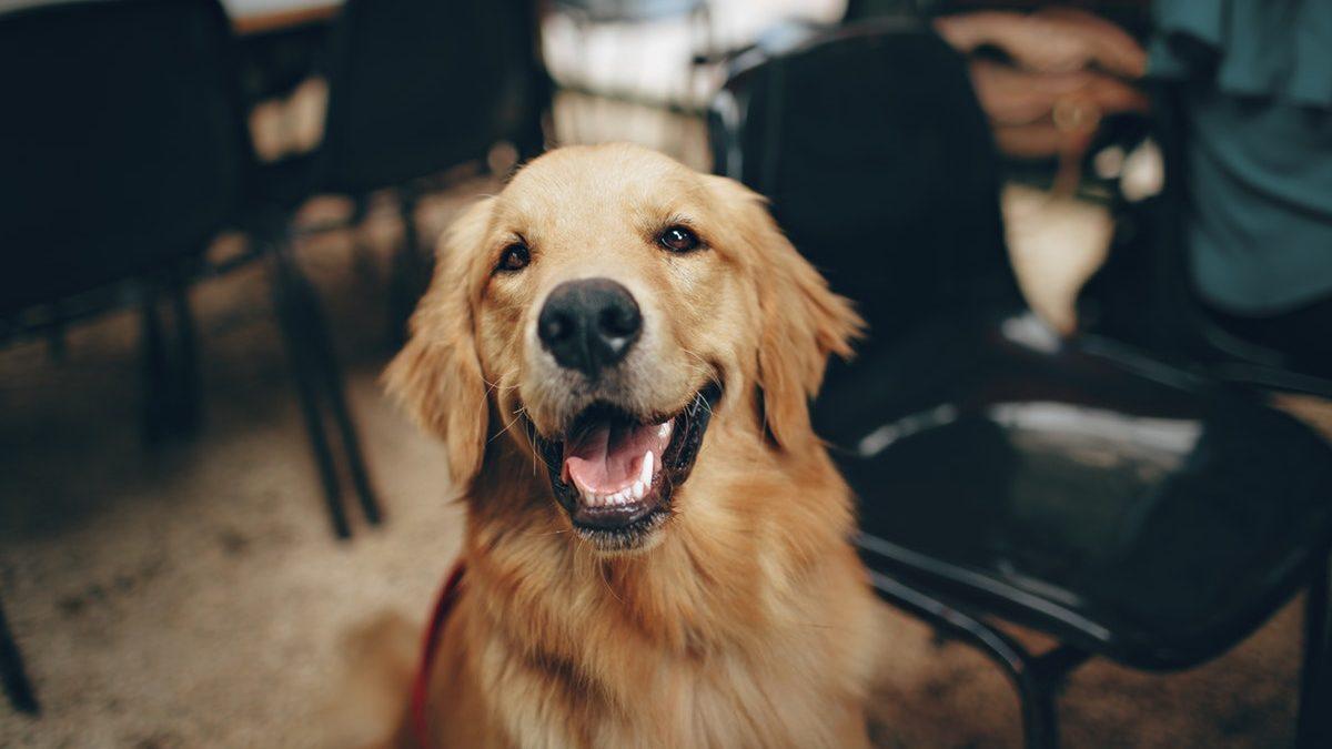 Custom Home Pet Features